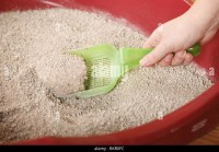 Litter Box Stock Photos & Litter Box Stock Images - Alamy