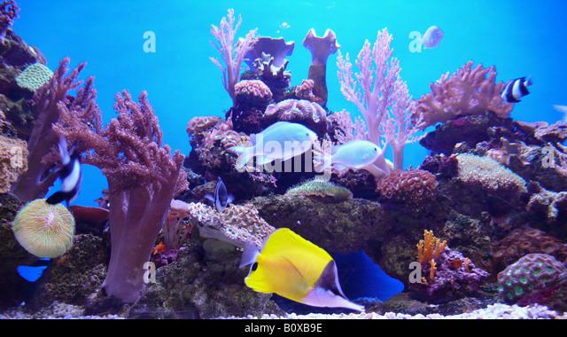 Fish Tank Stock Photos & Fish Tank Stock Images   Alamy
