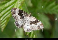 Moth Carpet Stock Photos & Moth Carpet Stock Images - Alamy