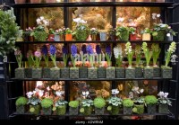 Flowers Shop Window Stock Photos & Flowers Shop Window ...