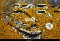 Mold Stockfotos & Mold Bilder - Alamy