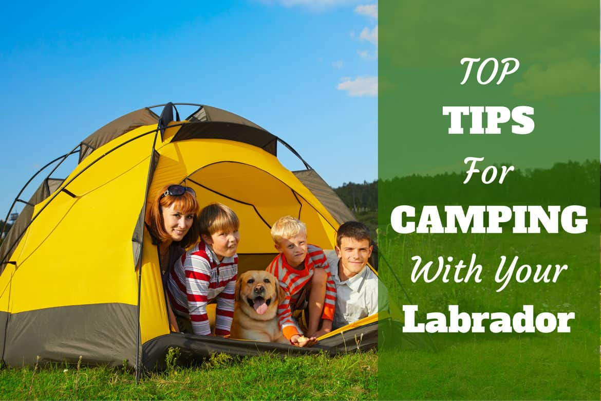 4 Camping Tips For Camping With Your Labrador