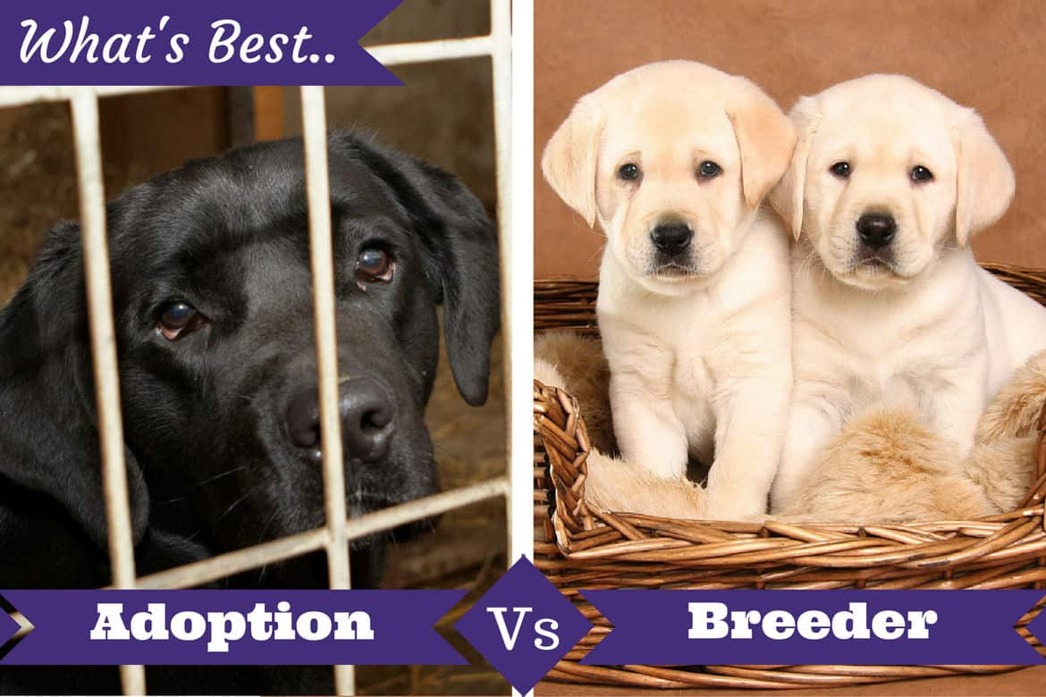 Rescue Dogs Puppies For Adoption Adoption From Shelter Vs Buying From A Breeder What S Best For You