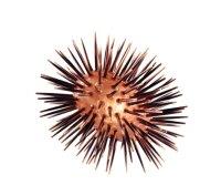 Sea Urchin Lamp - Oval   LaCor Furniture