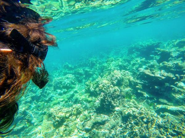 Snorkel en el coral de las islas del Rosario