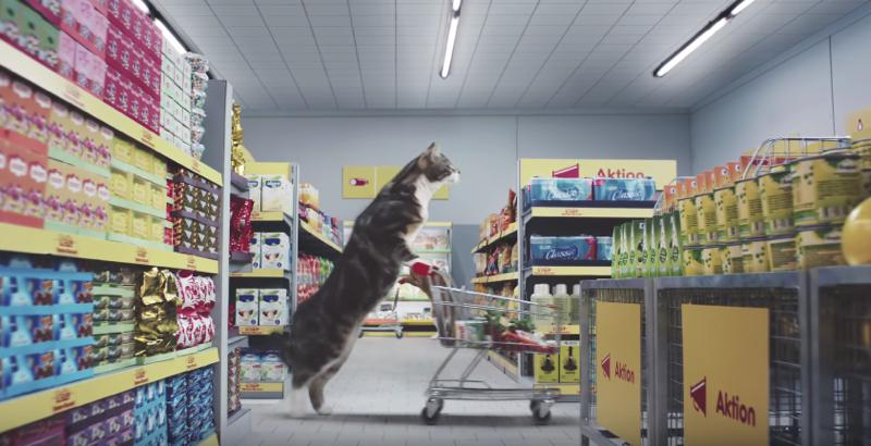 netto-cats-advert00