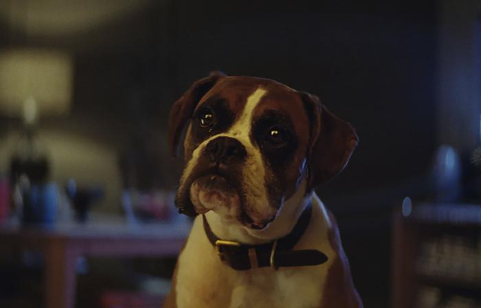 buster-the-boxer02