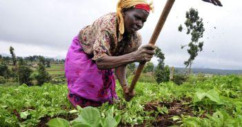Woman farmer in Sub-Saharan Africa (Photo: Wikipedia)