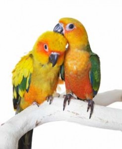 Cute Parakeet Wallpaper Conure Personality Food Amp Care Pet Birds By Lafeber Co