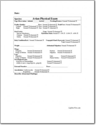 Avian Physical Examination Form 2 LafeberVet - physical exam form