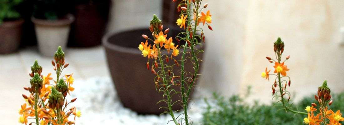 jardin-sin-mantenimiento