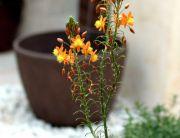 Las 9 mejores plantas para terrazas la habitaci n verde - Jardin sin mantenimiento ...