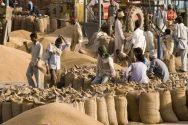 Wheat procurement by Government starts in Mandi Bahauddin
