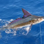 Fishing_on_La_Digue_Island_Seychelles_(sailfish)