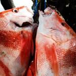 Fishing_on_La_Digue_Island_Seychelles_(snapper)