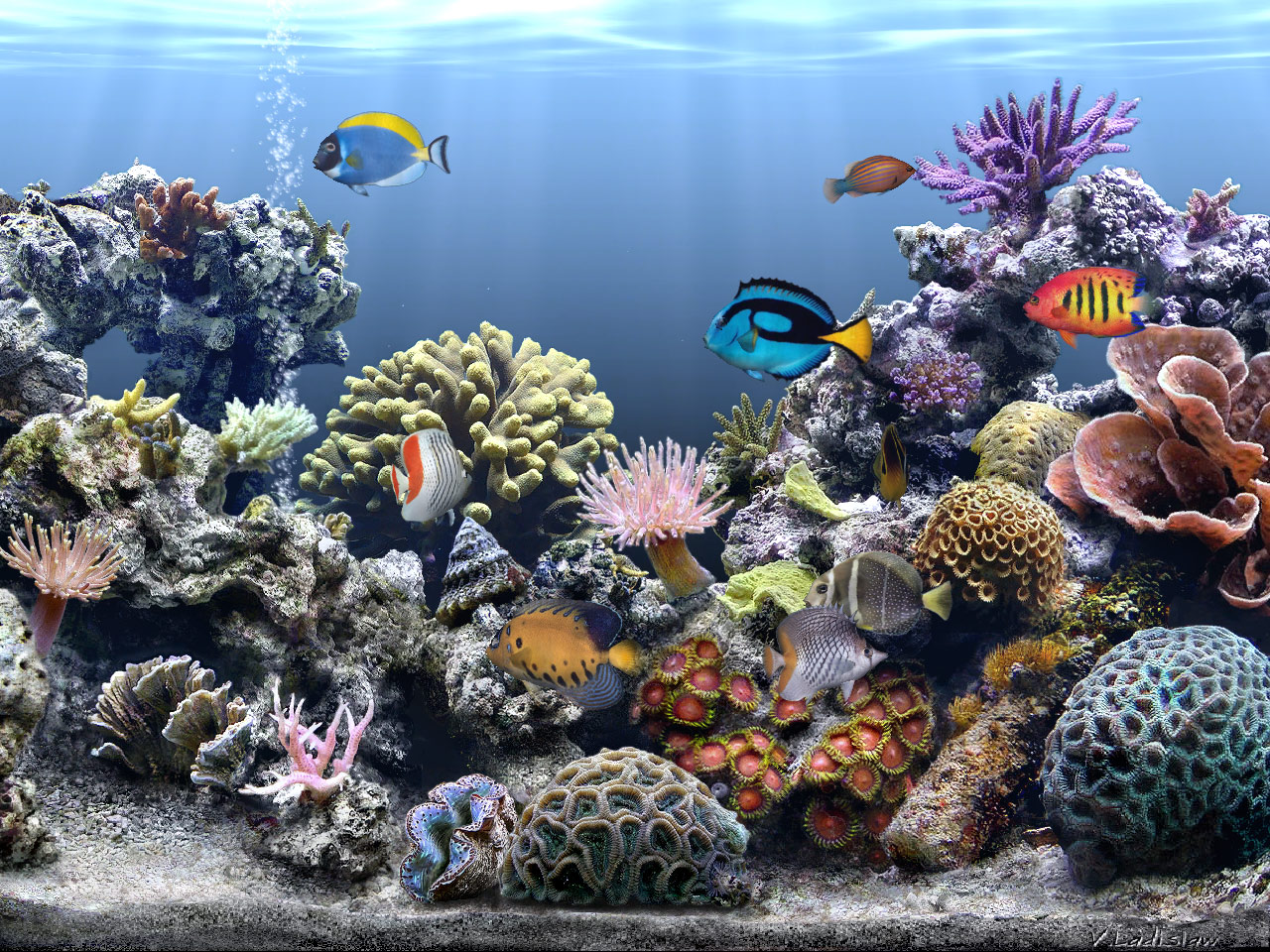 Fish 3d Live Wallpaper Download Aquarium