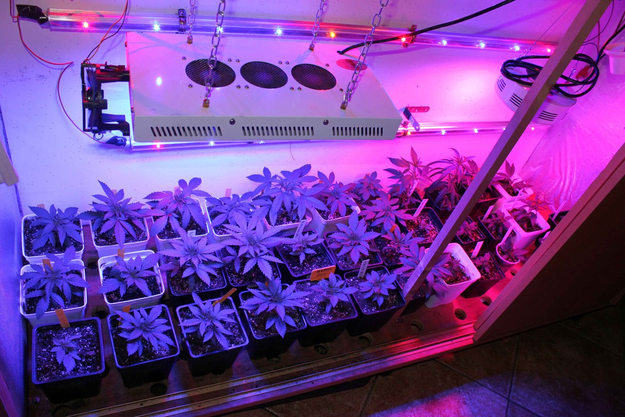 Lampara Led Cultivo Indoor El Cultivo Interior Con Leds