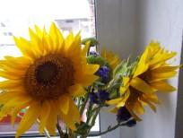 floarea_soarelui_al