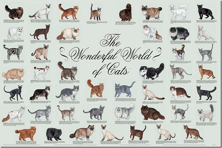 Katzenrassen Der Welt Poster Friday Films: Identifying Cat Breeds « Adopt A Lapcat