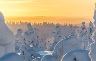 Frosted-trees-Lapland-Sunse