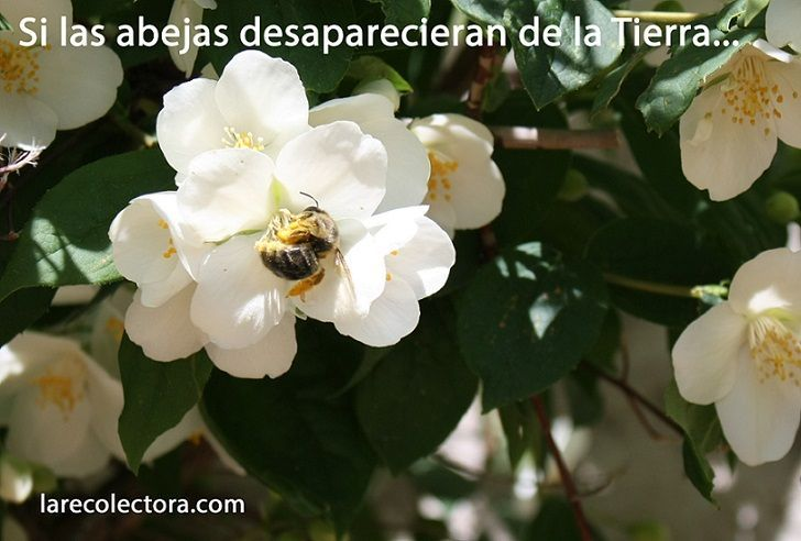 Imagen: Recolectora. Tomada en la Sierra de Segura, Jaén.