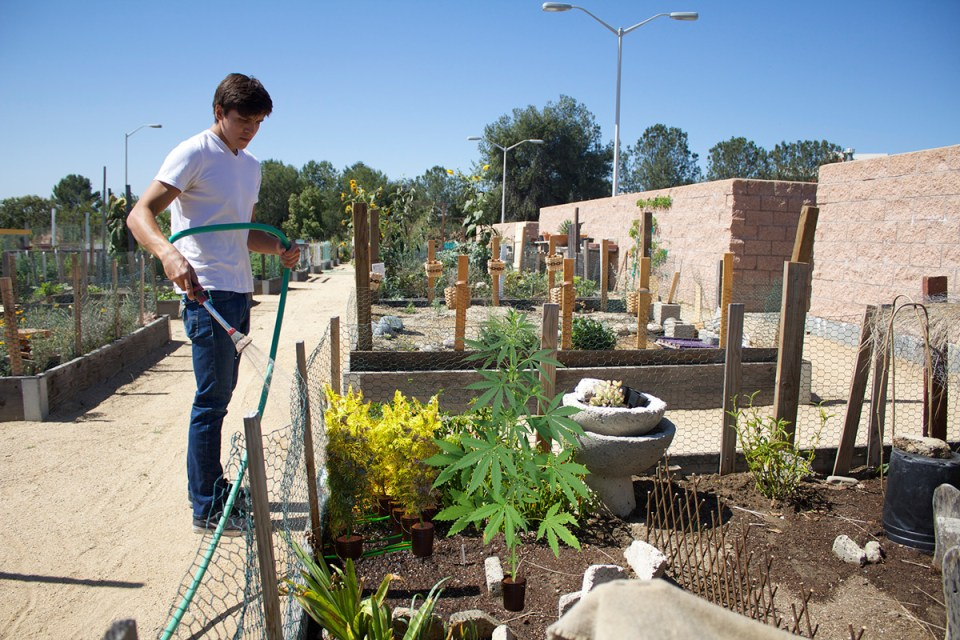 Buds-R-Us: Saddleback students are getting very excited about the new addition to their horticulture garden plots this semester. (Photo illustration / Niko LaBarbera | Lariat)