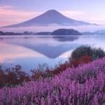 Как сдвинуть гору Фудзи, или Интервью для гениев