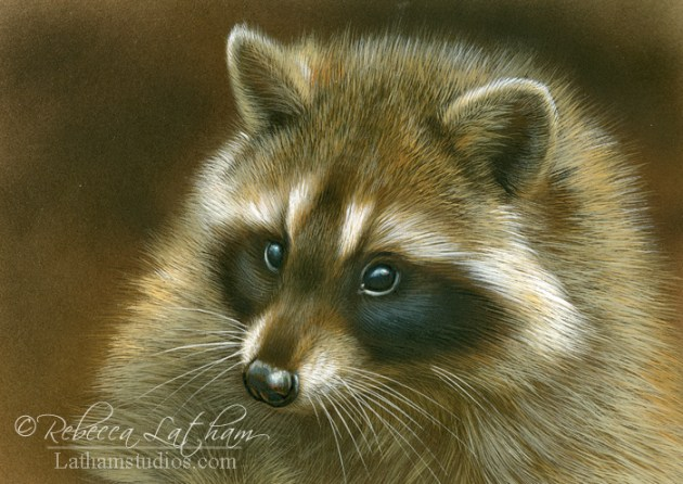 Spellbound - Raccoon, 5in x 7in, watercolor on board with sterling silver, ©Rebecca Latham