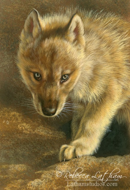 Golden Light - Wolf Pup Study, 5in x 7in, watercolor on board with sterling silver and 24kt gold, ©Rebecca Latham