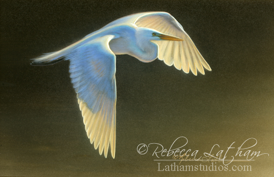 Morning Flight - Great Egret,  Watercolor & 24kt gold 4in x 6in, ©Rebecca Latham