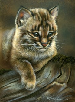 "Quiet Spot - Bobcat Kitten, 5"" x 7"", watercolor on board, ©Rebecca Latham - The Snowgoose Gallery The Art of the Miniature XXIII"
