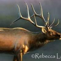 Elk Miniature Watercolor Painting - Progress
