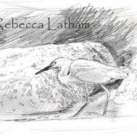 Snowy Egret Sketch