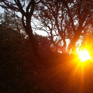 GTS-sunset thru tree