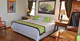 green-iguana-room1