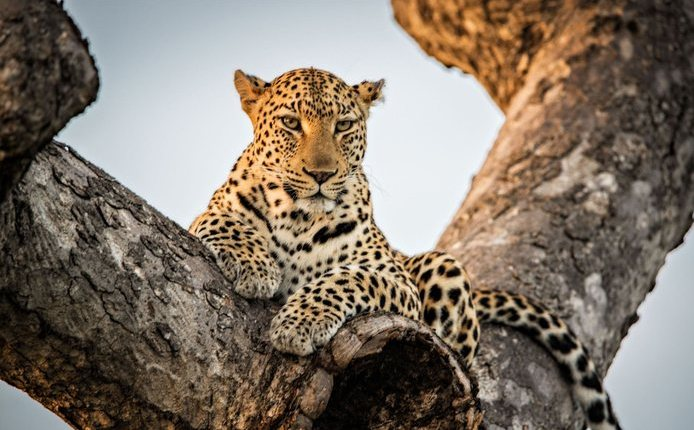 andBeyond to offer specialist photographic safaris