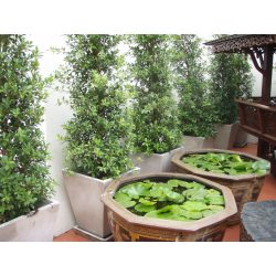 Small Crop Of Hanging Garden Ideas