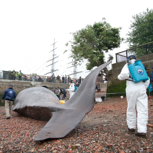 Life-size beached whale sculpture by Captain Boomer