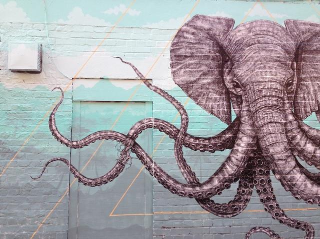 Elephant Octopus