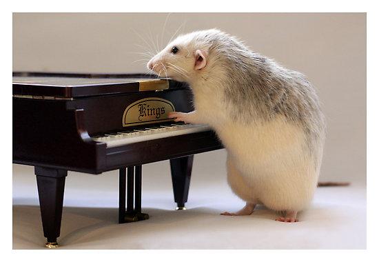 Rat Photos