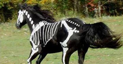 Cool Girl Wallpaper For Whatsapp Skeleton Horse Artist Paints White Bones On Her Black Horse