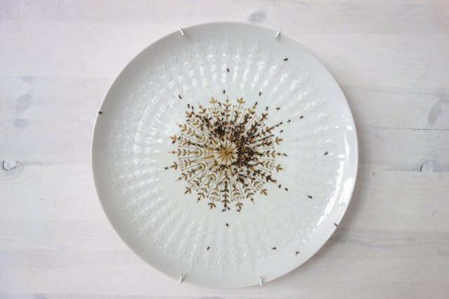 Ant Plate