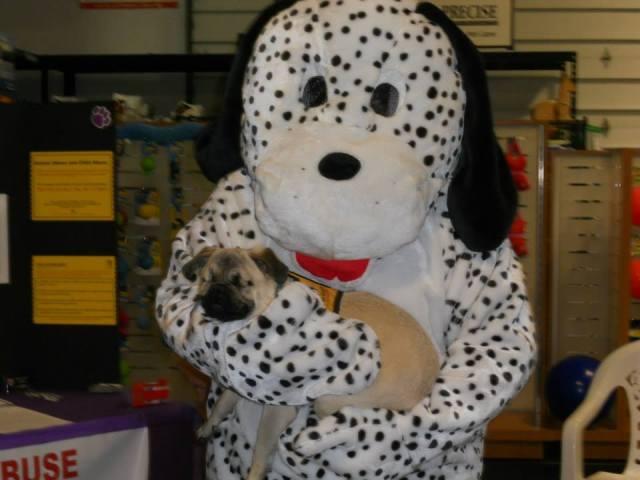 Xander at Pet Store