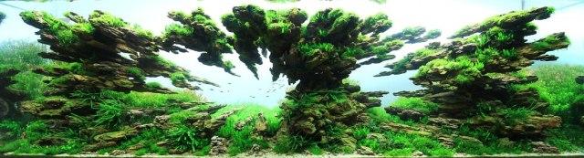 Competitve Aquascaping