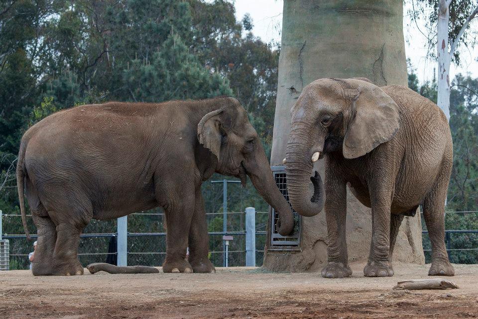 Mila and Mary