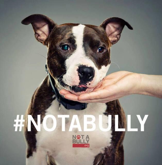 Porter - Not A Bully