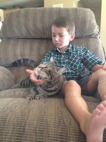 Four-Year-Old Boy Is Rescued from a Dog Attack by the Family Cat