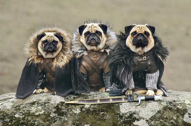 Robb Stark, Ned Stark and Jon Snow