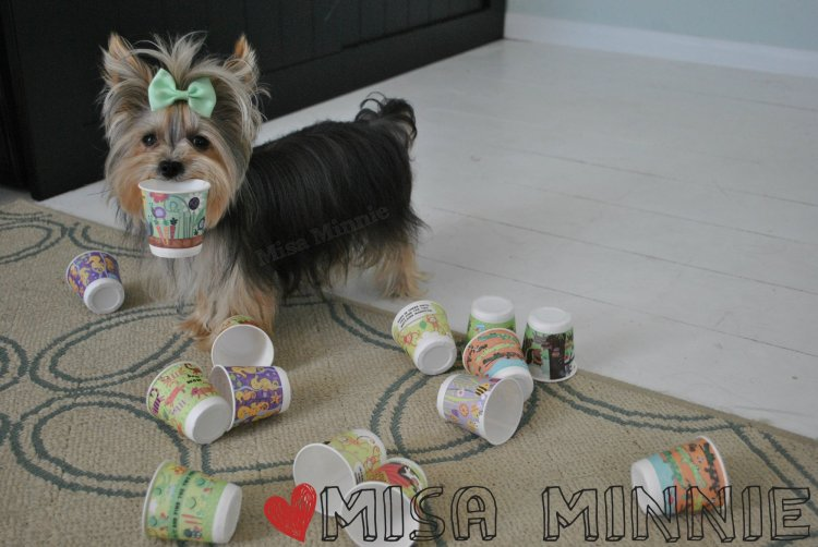 Misa Minnie and Cups