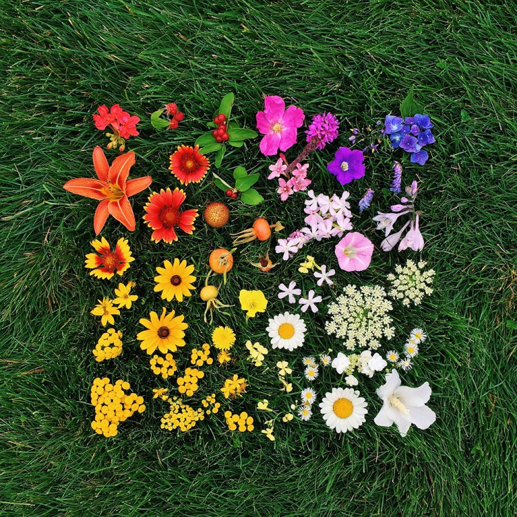 Natural and Edible Objects Arranged Neatly by Color